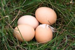 Três ovos da galinha que encontram-se em uma grama verde Fotos de Stock Royalty Free