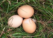 Três ovos da galinha que encontram-se em uma grama verde Foto de Stock Royalty Free