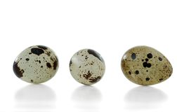 Três ovos de codorniz com os escudos coloridos isolados no fundo branco imagem de stock