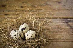 Três ovos de codorniz no ninho Foto de Stock Royalty Free