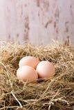 Três ovos de galinha colocados no monte de feno Imagens de Stock Royalty Free
