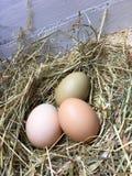 Três ovos frescos - brancos, marrons e verdes Fotos de Stock