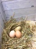 Três ovos frescos - brancos, marrons e verdes Fotografia de Stock