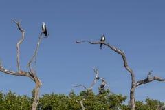 Três pássaros empoleirados em árvores Foto de Stock