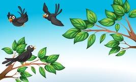 Três pássaros na floresta ilustração royalty free