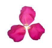 Três pétalas cor-de-rosa Imagem de Stock Royalty Free