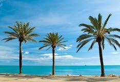 Três palma-árvores Fotografia de Stock