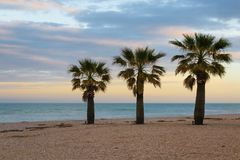 Três palmas na praia Imagem de Stock Royalty Free