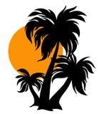 Três palmeiras Foto de Stock
