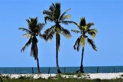 Três palmeiras do coco nas Caraíbas Imagem de Stock
