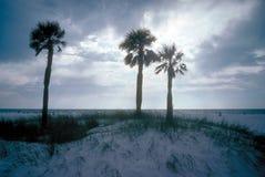 Três palmeiras na praia com por do sol no fundo Fotografia de Stock Royalty Free