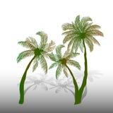 Três palmeiras verdes com sombra no fundo branco, Fotografia de Stock Royalty Free