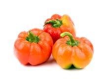 Três paprika frescas Fotos de Stock Royalty Free