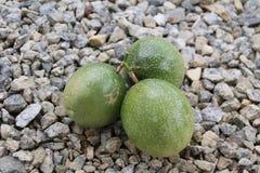 Três passionfruits verdes em pedras Fotos de Stock Royalty Free