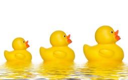 Três patos Imagem de Stock Royalty Free