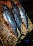 Três peixes Fotos de Stock