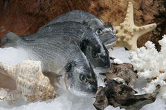 Três peixes crus Foto de Stock Royalty Free