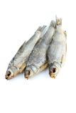 Três peixes da barata do mar Imagens de Stock