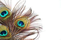 Penas do pavão Imagem de Stock Royalty Free