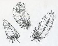 Três penas tiradas com tinta Fotografia de Stock