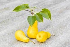 Três peras amarelas no fundo de madeira cinzento, close-up Imagens de Stock
