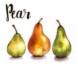 Três peras maduras em um branco esboço feito à mão Imagem de Stock