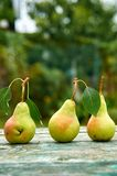Três peras verdes com as folhas no marrom verde de madeira envelheceram o fim do fundo da textura acima Peras no fundo borrado da Fotos de Stock