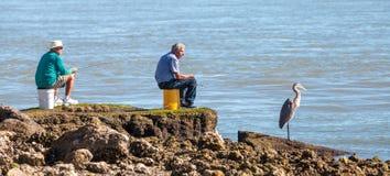 Três pescas, dois homens e herodias de um Ardea da garça-real de grande azul por Fotografia de Stock Royalty Free