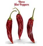Três pimentas de pimentão quente Fotos de Stock