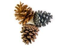 Três Pinecone Fotos de Stock