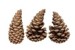 Três Pinecones Fotografia de Stock
