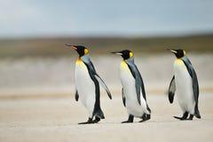 Três pinguins de rei que dirigem para fora ao mar foto de stock royalty free