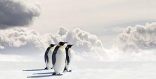 Três pinguins em Continente antárctico Imagem de Stock Royalty Free