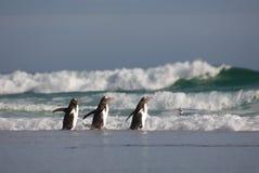 Três pinguins que andam na água Imagem de Stock Royalty Free
