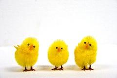 Três pintainhos amarelos Foto de Stock