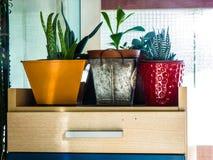 Três plantas em uns potenciômetros foto de stock royalty free