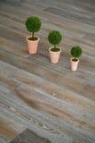 Três plantas no assoalho Fotos de Stock Royalty Free