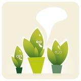 Três plantas nos potenciômetros Fotografia de Stock Royalty Free