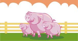 Três porcos pequenos Fotografia de Stock