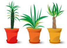 Três potenciômetros com plantas Fotografia de Stock Royalty Free