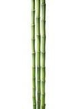 Três ramos do bambu isolados no fundo branco Dracaena do ` s da máquina de lixar Fotos de Stock Royalty Free