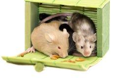 Três ratos decorativos Imagens de Stock Royalty Free