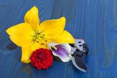 Três recentemente flores de corte do jardim ao lado da poda sh imagem de stock royalty free