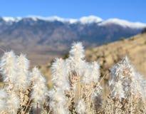 Três rios nanômetro Montanhas tampadas neve de Sacramento imagem de stock royalty free