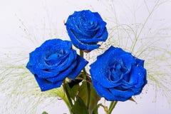 Três rosas azuis bonitas com folhas verdes Imagem de Stock Royalty Free