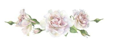 Três rosas cor-de-rosa da aquarela ilustração stock