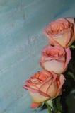 Três rosas cor-de-rosa no fundo azul fotografia de stock royalty free