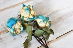 Três rosas secadas Fotografia de Stock Royalty Free