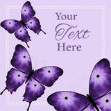 Três roxos e fundo preto das borboletas da flor Fotografia de Stock