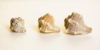 Três seashells imagens de stock